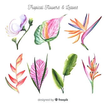 Watercolor tropical flowers and leaves pack