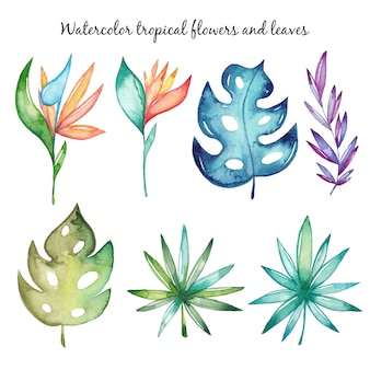 Watercolor tropical flowers and leaves