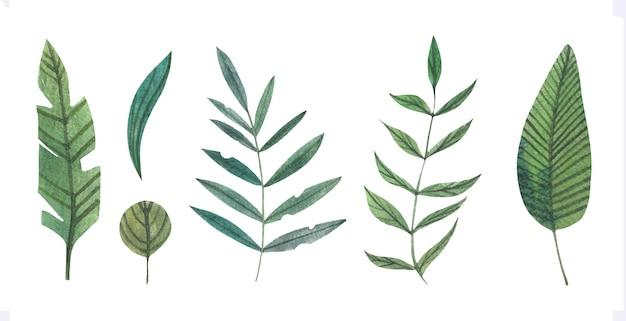 Акварельные листья тропических зеленых чернил