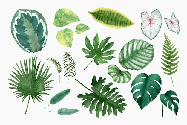 Акварель тропический лист набор иллюстрации