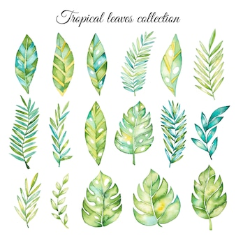 Watercolor tropical leaves collection