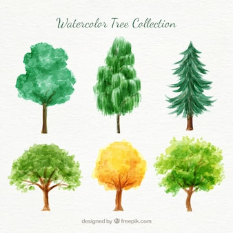 Watercolor variety of trees pack