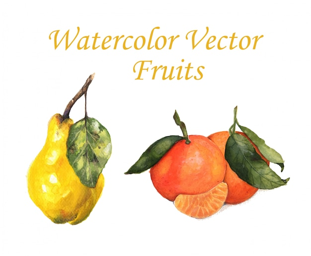 Watercolor vector fruits