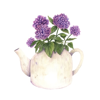 Watercolor vector illustration flower pot teapot bouquet hydrangea hortensia botanical clip art
