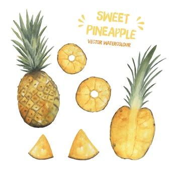 Watercolor vector pineapple tropical fruit exotic illustration clip art sweet summer