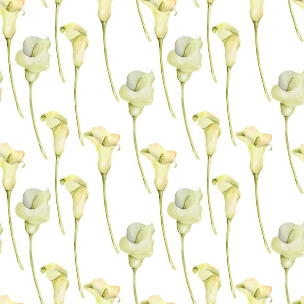 수채화 흰색 칼라스 꽃 원활한 패턴, 손 흰색 배경에 그린