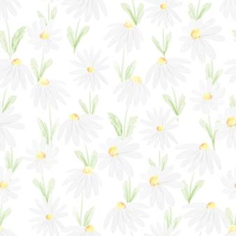 Watercolor white daisy seamless pattern   illustration