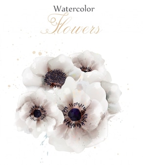 Watercolor white poppies flowers