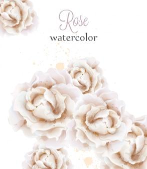 수채화 흰 장미