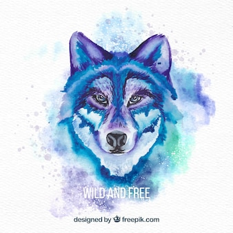 Watercolor wild wolf' s face