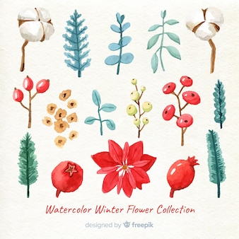 Watercolor winter flower collection