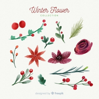 Watercolor winter flowers collection