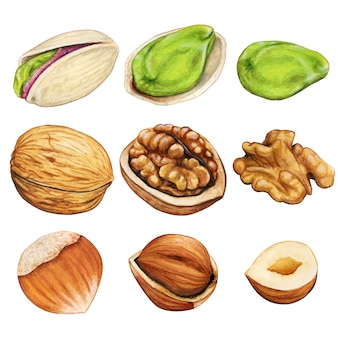 Watercolor winter nuts