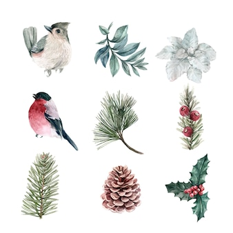 Watercolor winter plants and bird collection