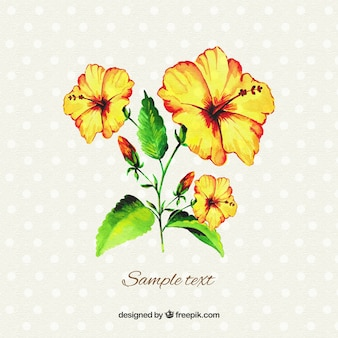 Watercolor yellow hibiscus