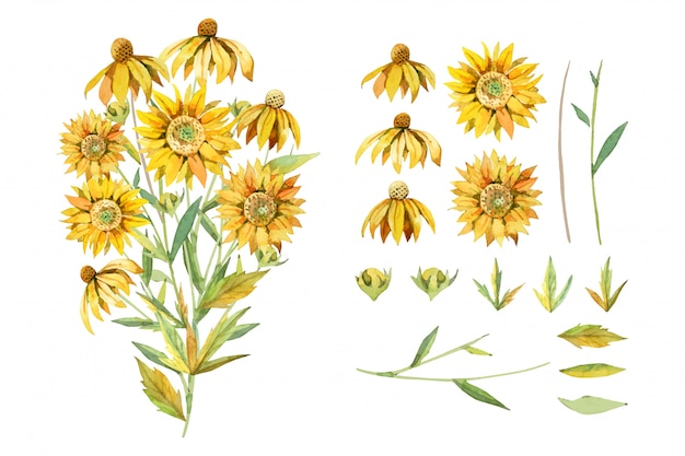 수채화 노란 해바라기 식물 꽃다발에 고립 된 흰색 배경 그림을 정렬합니다.