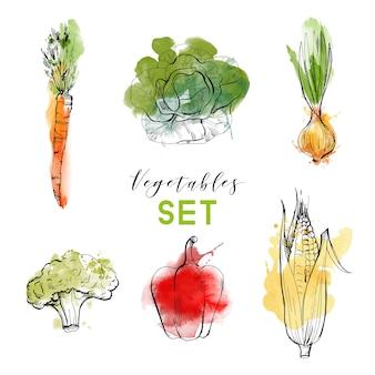 水彩野菜セット。手描きスケッチ