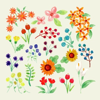 Watercolour spring colourful flower collection