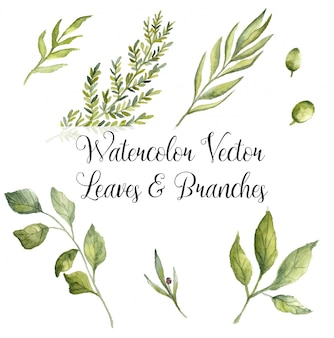 Watercolour vector leaves and branches