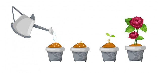 Watering can with rose life cycle vector