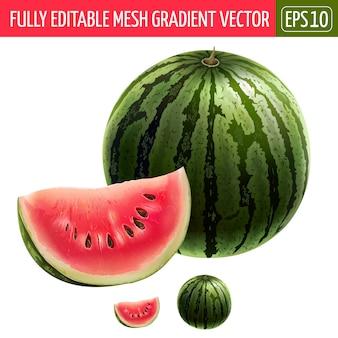 Watermelon illustration on white