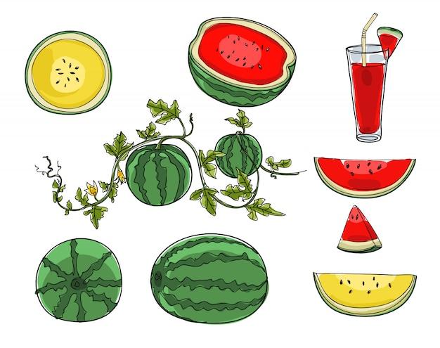 Watermelon set of hand drawn cute art illustration vector