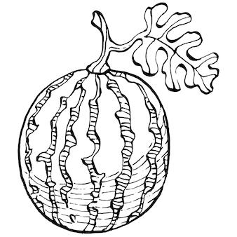Арбуз эскиз векторной графики изолированные рисованной ягоды на белом фоне летние ягоды