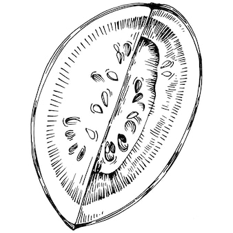 Watermelon sketch vector drawing. isolated hand drawn berry on white background. summer berry engraved style illustration. decoration for food packaging.
