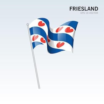 회색 배경에 고립 된 네덜란드의 프리슬란트 지방의 깃발을 흔들며