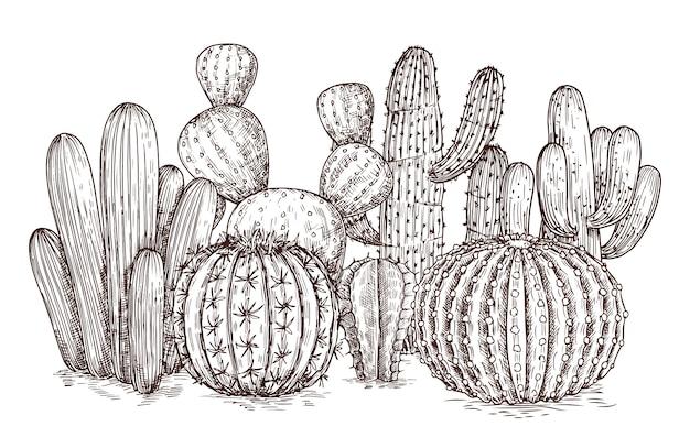 Западная пустыня кактусов мексиканских растений в стиле эскиза векторная иллюстрация