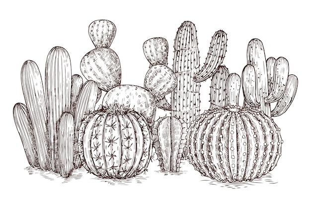 Western desert cacti mexican plants in sketch style vector illustration