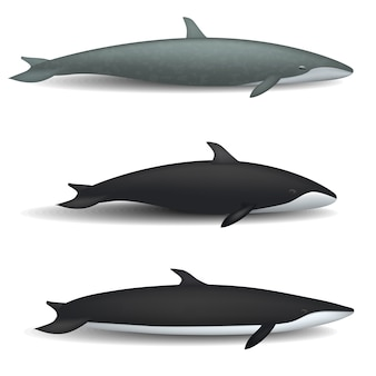 Whale blue tale fish mockup set. realistic illustration of 3 whale blue tale fish mockups for web