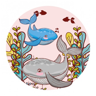 Whale couple animal with seaweed plants