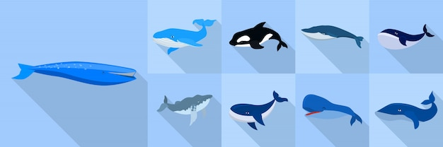Whale icon set, flat style