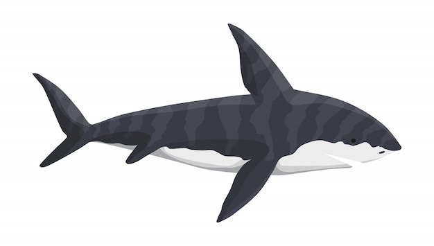Whale shark character. underwater sea animal. big dangerous marine predator. illustration of marine wildlife