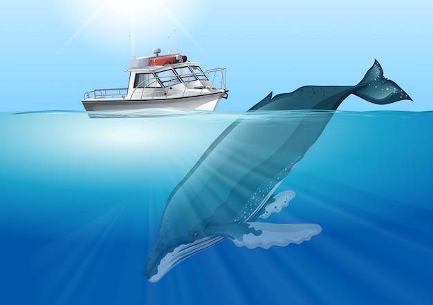 Balena nuota nell'oceano