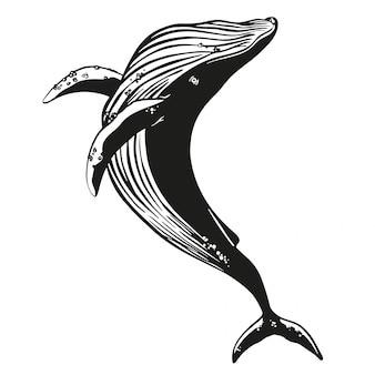 고래 벡터 손으로 그린 그림.