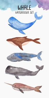 クジラの水彩コレクション