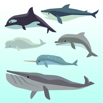 Whales and dolphins, marine underwater mammal, ocean animals flat