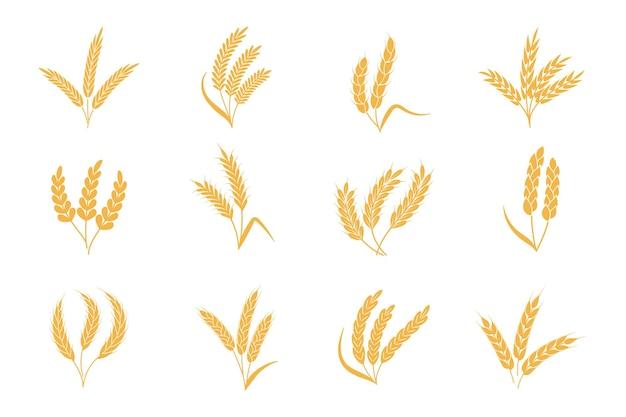 Колосья пшеничные и ржаные. значок шипа зерна стебля урожая. золотые элементы для логотипа органических продуктов питания, упаковки хлеба или пивной этикетки. набор иконок изолированных вектор силуэт