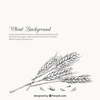 Wheat background in hand drawn style