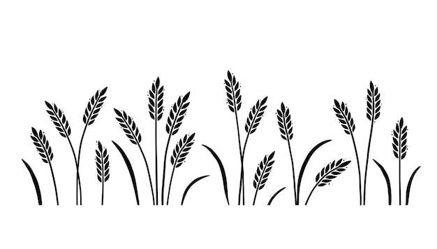 Wheat barley field background for oat