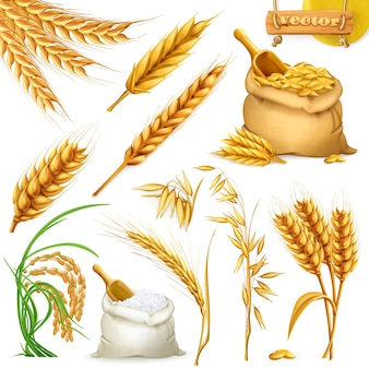 Wheat, barley, oat and rice. cereals 3d illustration elements set