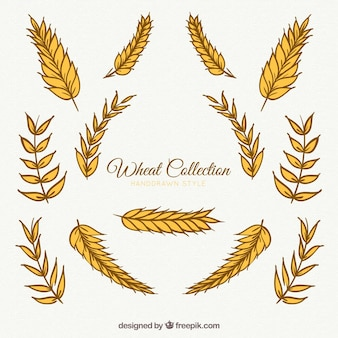 Wheat collection in hand drawn style