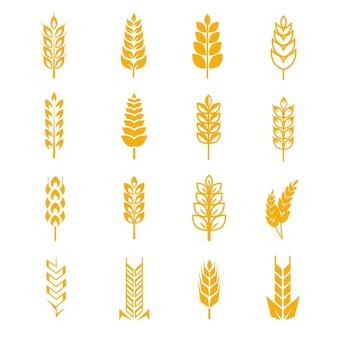 Wheat ears bread vector symbols