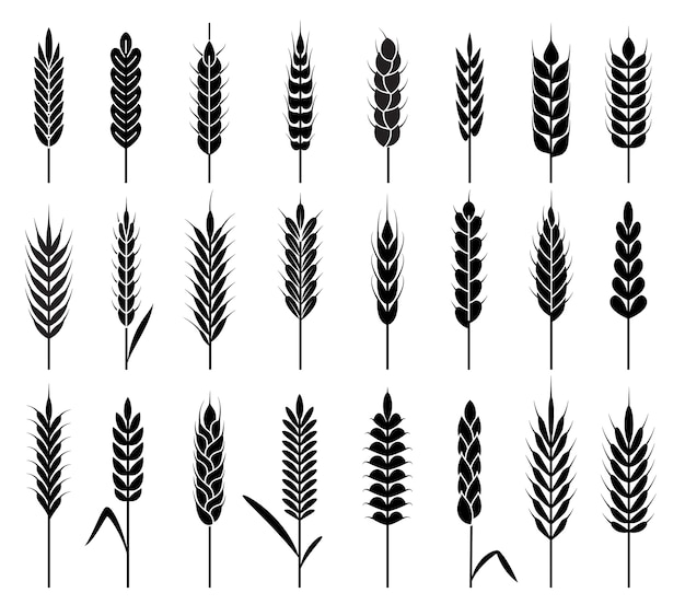 Wheat ears icons.