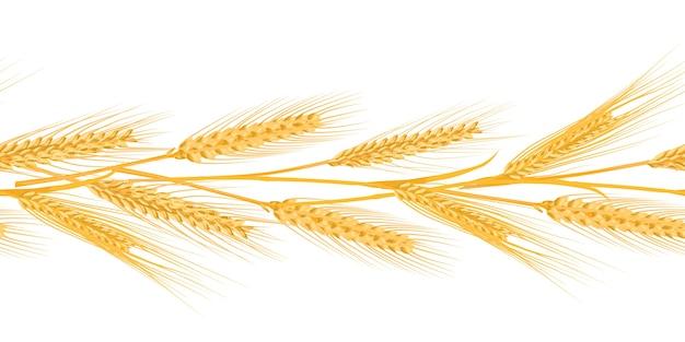 Пшеница уши иллюстрации