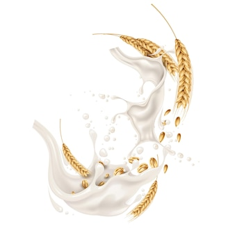 Wheat ears spikelets with grains in milk splash explosion