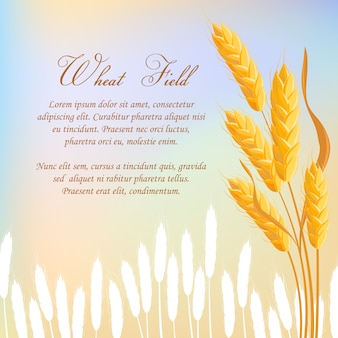 Wheat field agricultural  concept