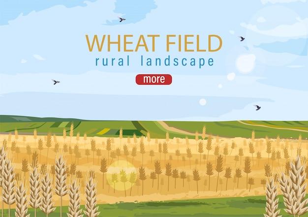 Wheat field autumn hay harvesting
